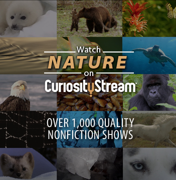 nature documentaries to stream in your homeschool