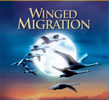 wingedmigrationbd2d