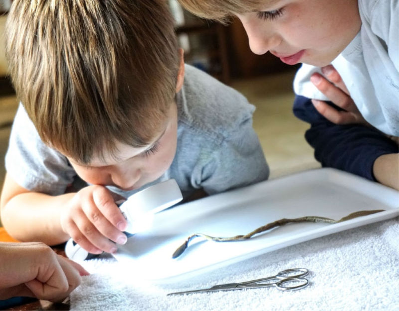 Don't be frightened of homeschool dissection! These kits have all you need to get started.