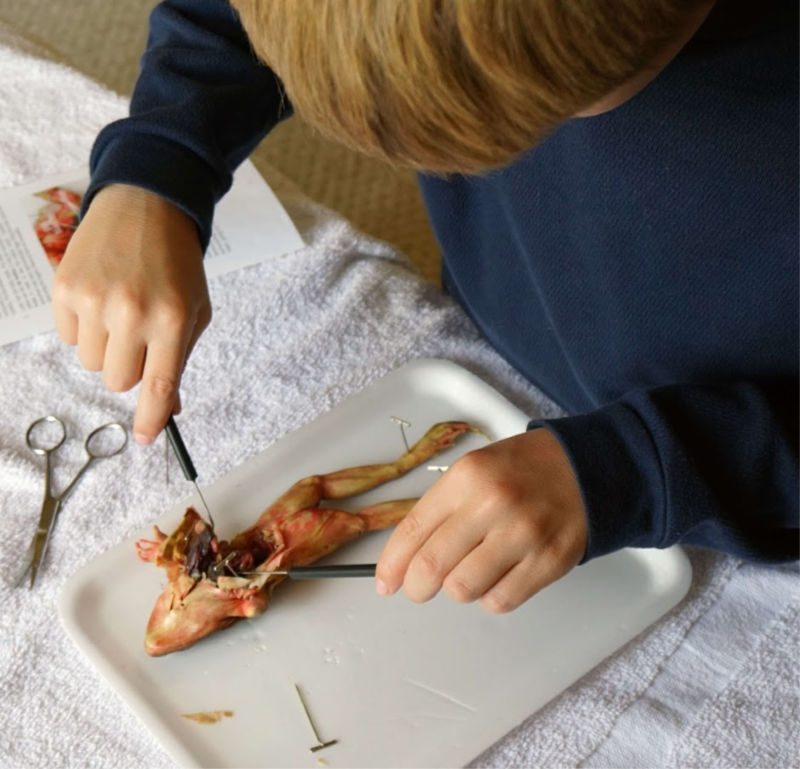 These homeschool dissection kits are wonderful!