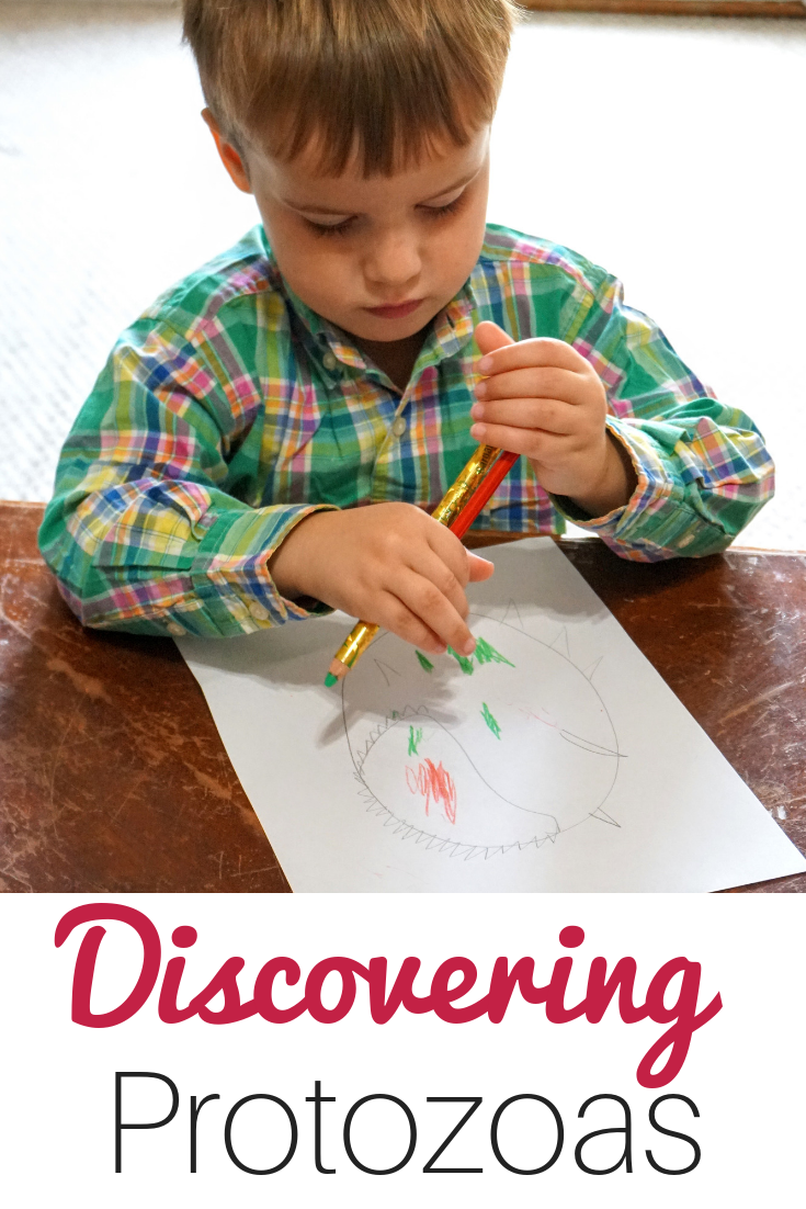 Teach your children about microscopic animals with this protozoa homeschool kit.